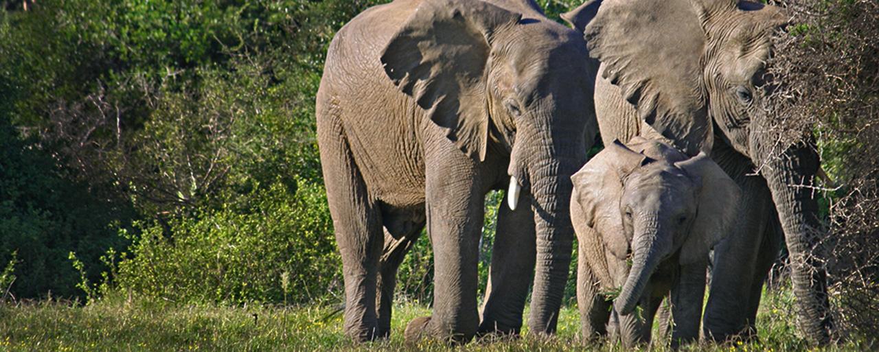 home_elephant_3
