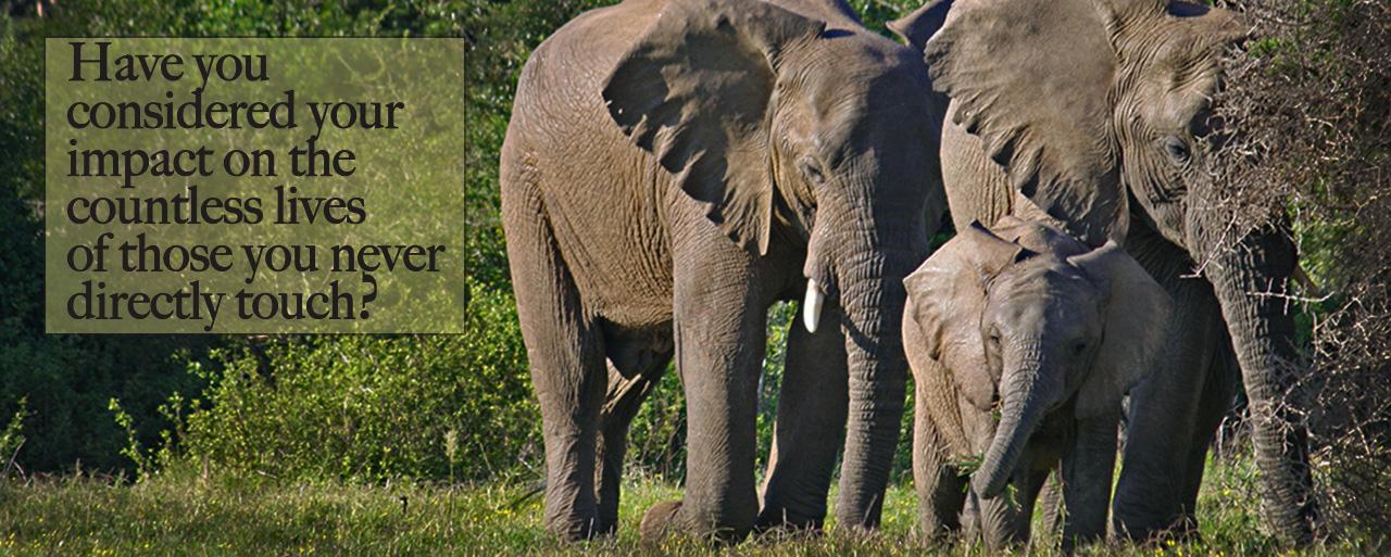 home_elephant_4