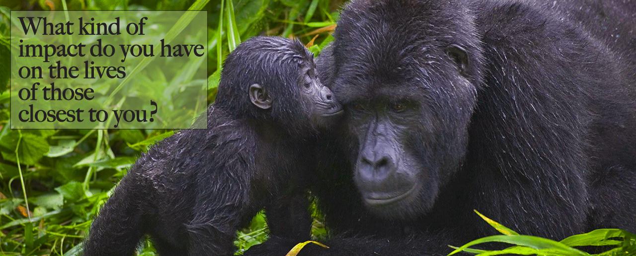 home_gorilla_2