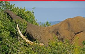 wheretostart-elephant